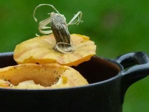 oeuf surprise dans miniature de courge et cassolette revol